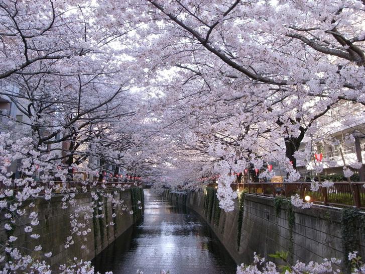 歓喜と悲哀の桜の夜明け_e0173239_530534.jpg