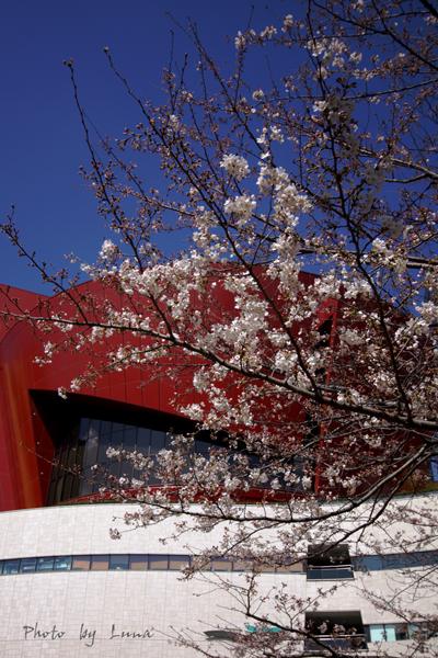 春のお便り_c0165046_17283067.jpg