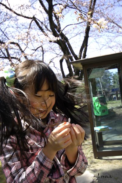 春のお便り_c0165046_17291027.jpg