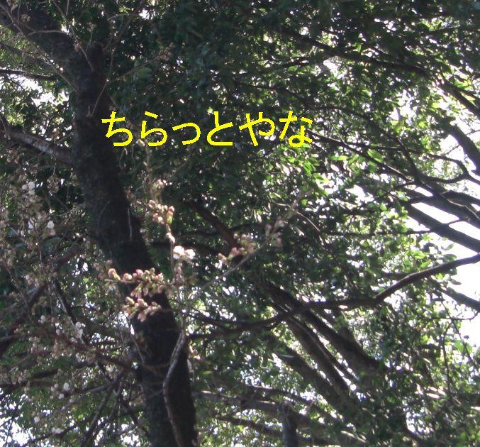 f0053952_1353253.jpg