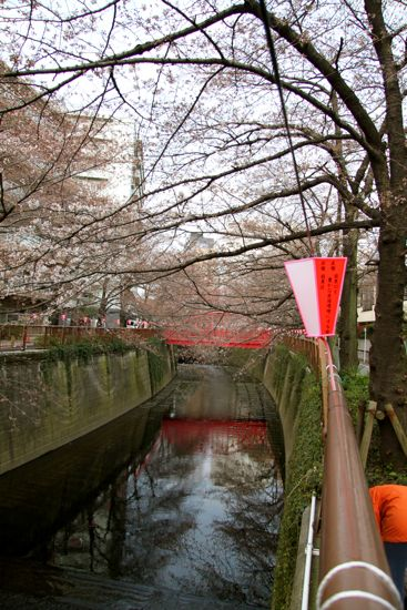 きょうの目黒川桜情報_f0160063_22404571.jpg