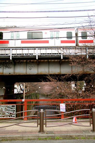 きょうの目黒川桜情報_f0160063_22421991.jpg