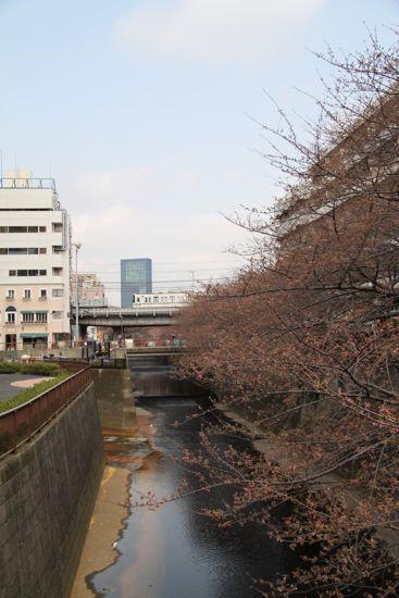 きょうの目黒川桜情報_f0160063_22424991.jpg