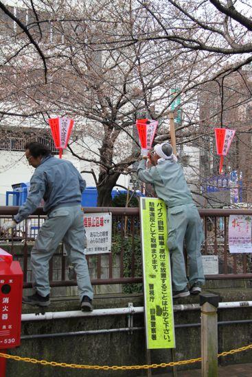 きょうの目黒川桜情報_f0160063_2244462.jpg