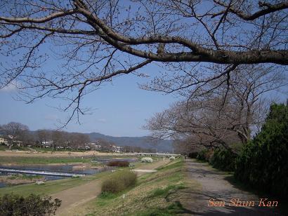 加茂川の桜_a0164068_22292851.jpg