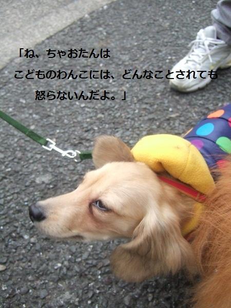 b0182968_1656218.jpg