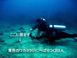 サメはどこへ?その代わりマクロ三冠王♪_f0144385_19321047.jpg