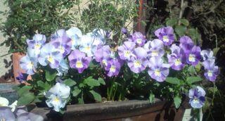 お庭の作品・・・パーゴラ 他^^:_a0162191_22414873.jpg