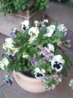 お庭の作品・・・パーゴラ 他^^:_a0162191_22522341.jpg