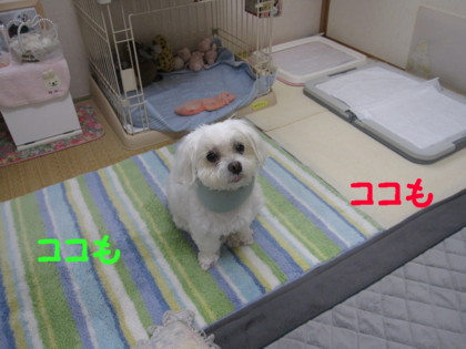 f0145192_2020631.jpg