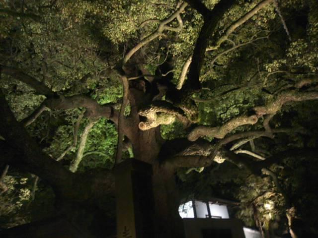 夜の京都  花灯路_c0100195_981211.jpg