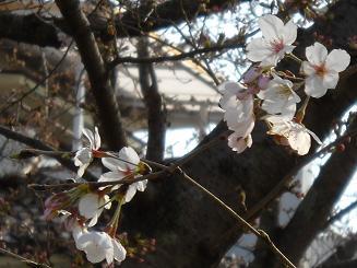 春_e0028417_16514054.jpg