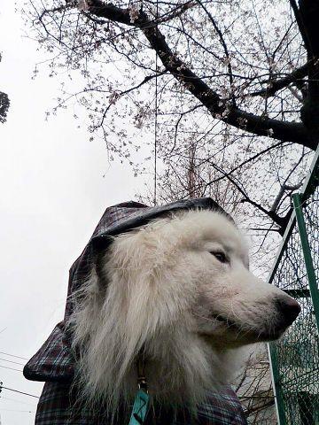 冷たい雨のカッパッパ_c0062832_19112525.jpg