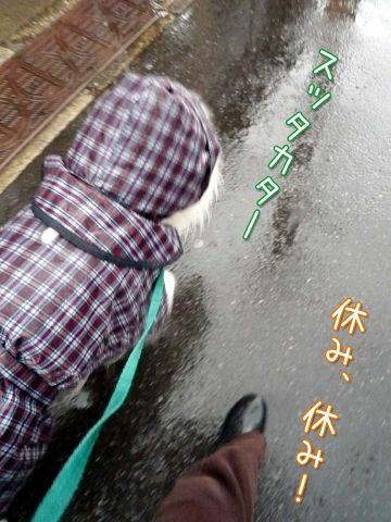 冷たい雨のカッパッパ_c0062832_19113899.jpg