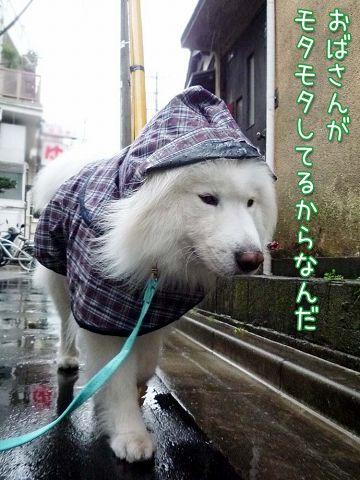 冷たい雨のカッパッパ_c0062832_19311419.jpg