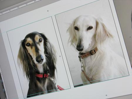 犬の証明写真_a0097735_23312752.jpg