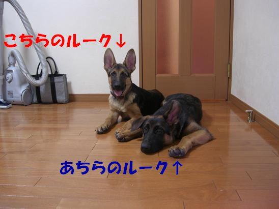 c0192541_20463647.jpg