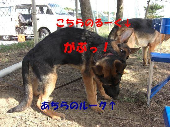 c0192541_20541372.jpg