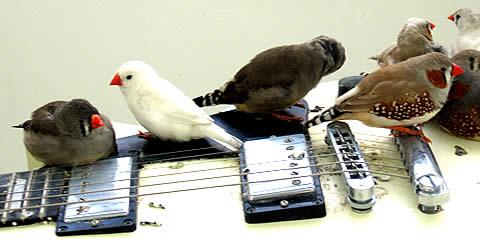 birds_b0129548_5334253.jpg