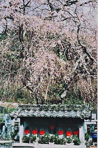 春、彼岸_e0156251_23155299.jpg