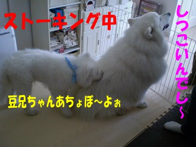 a0166954_1034839.jpg