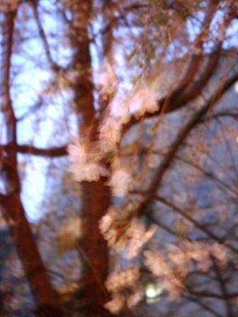 しだれ桜_a0163160_13145581.jpg