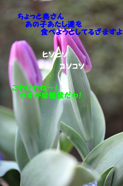 e0020166_12581495.jpg