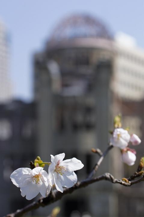 Sakura * Bird * Walking_f0189086_20362153.jpg