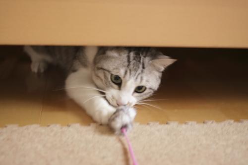 ベッドの下から飛び出すお坊ちゃん