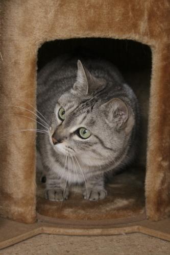猫タワーハウスで待ち構えるお嬢さん