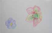 春だ!・大人クラス_f0211514_1752751.jpg