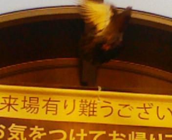 b0020017_1247269.jpg