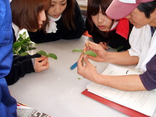 関東から4人の女性がワークステイに越前市にきました(その4)_e0061225_10265182.jpg