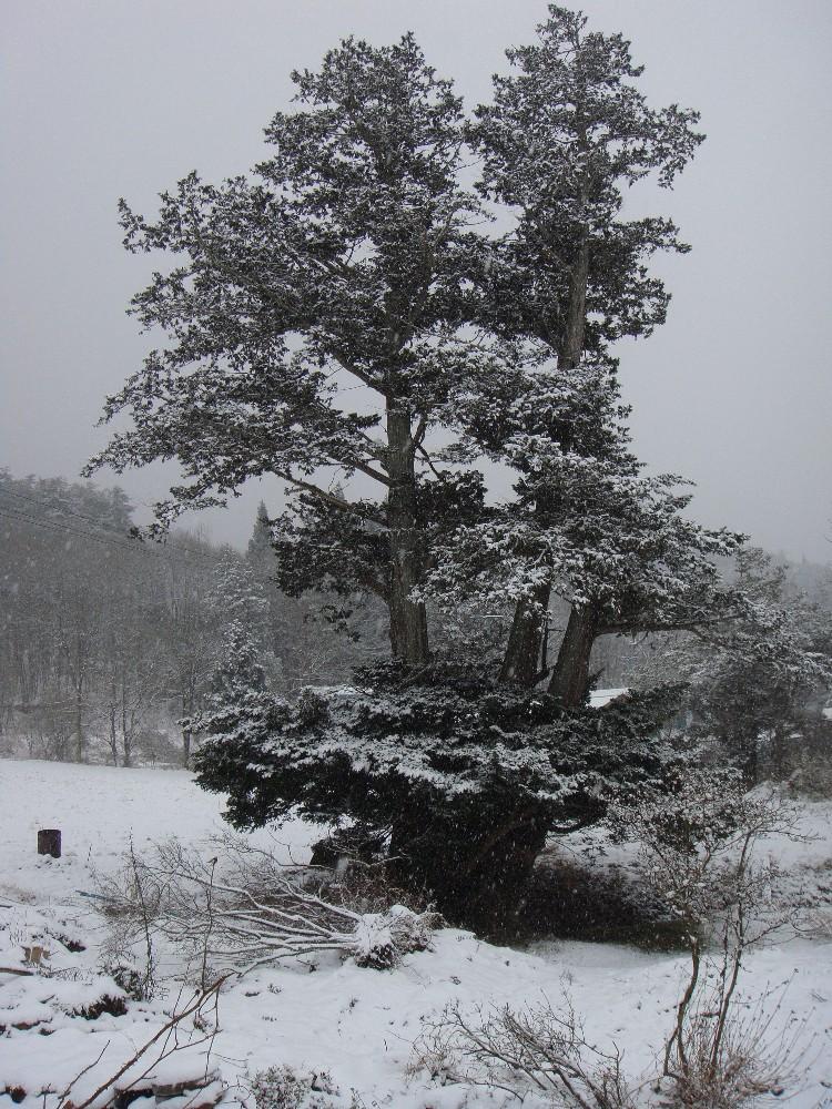 朝から一日雪降り_c0111229_18213139.jpg