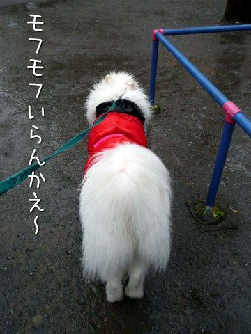 雨ニモ負ケズ モフモフ売リ_c0062832_16522360.jpg
