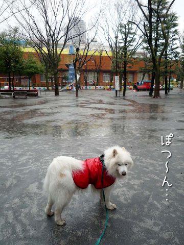 雨ニモ負ケズ モフモフ売リ_c0062832_16523025.jpg