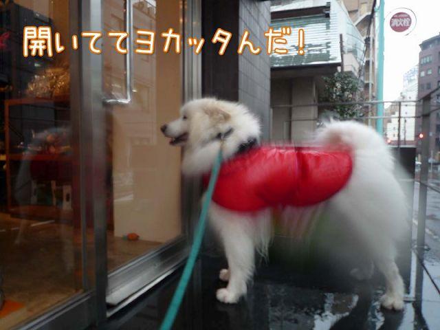 雨ニモ負ケズ モフモフ売リ_c0062832_16525257.jpg