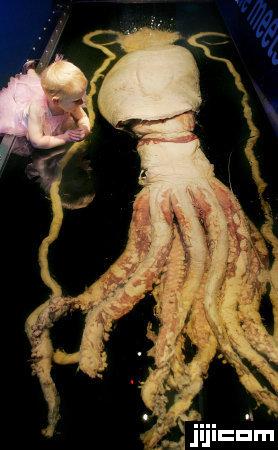 巨大海洋生物 ダイオウイカとその仲間_b0052564_1229212.jpg