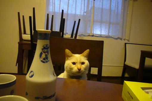 sake._c0153966_21423796.jpg