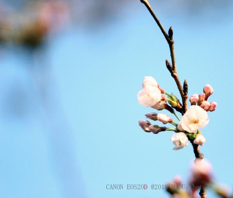 f0096666_6231750.jpg