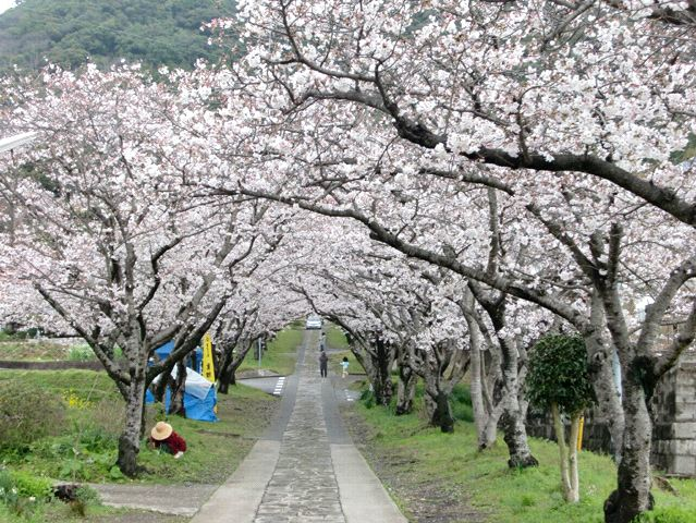 ●もう桜も満開かな・・・_e0070880_1375958.jpg