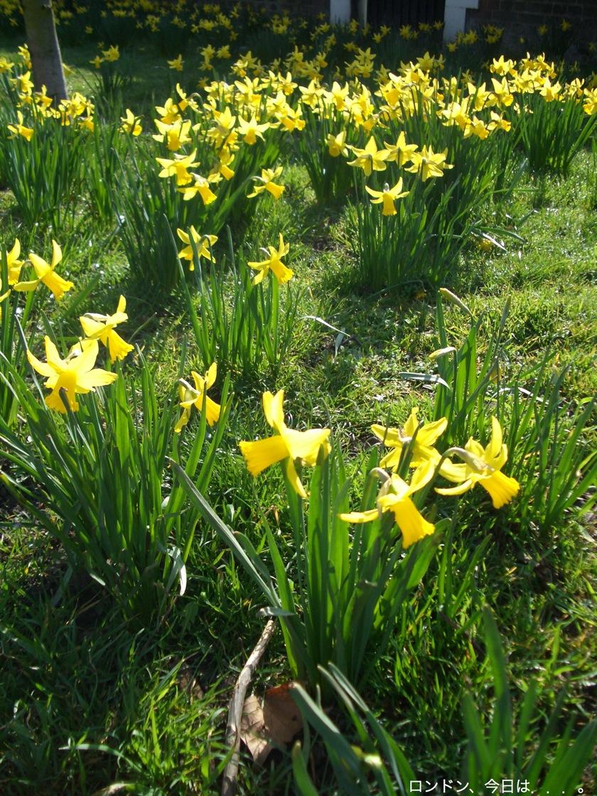 春の訪れを告げる花_a0137487_23311415.jpg