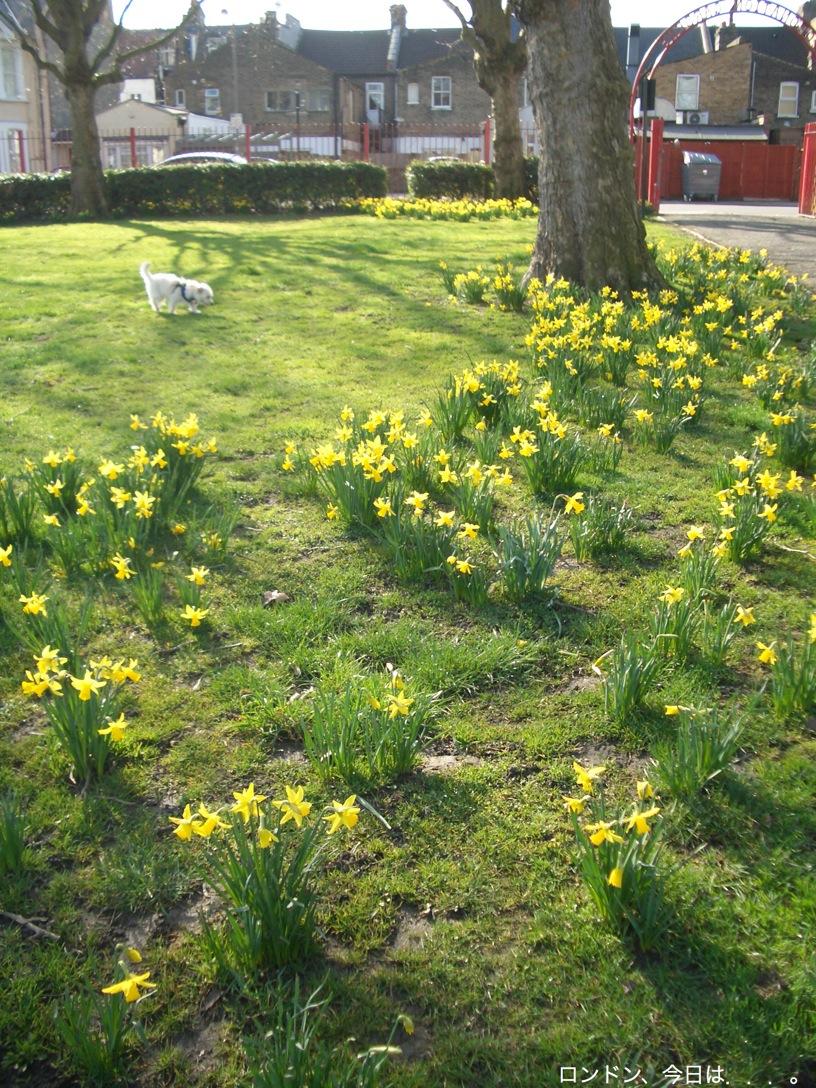 春の訪れを告げる花_a0137487_23373429.jpg