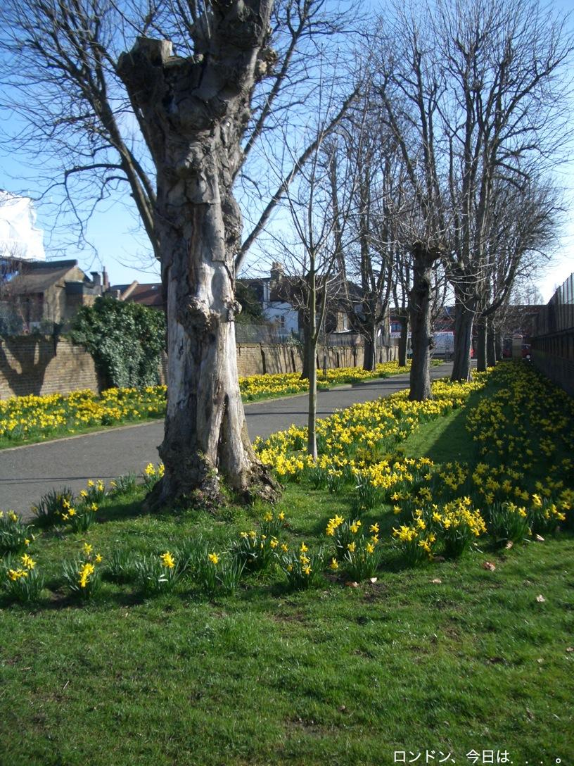 春の訪れを告げる花_a0137487_23393522.jpg