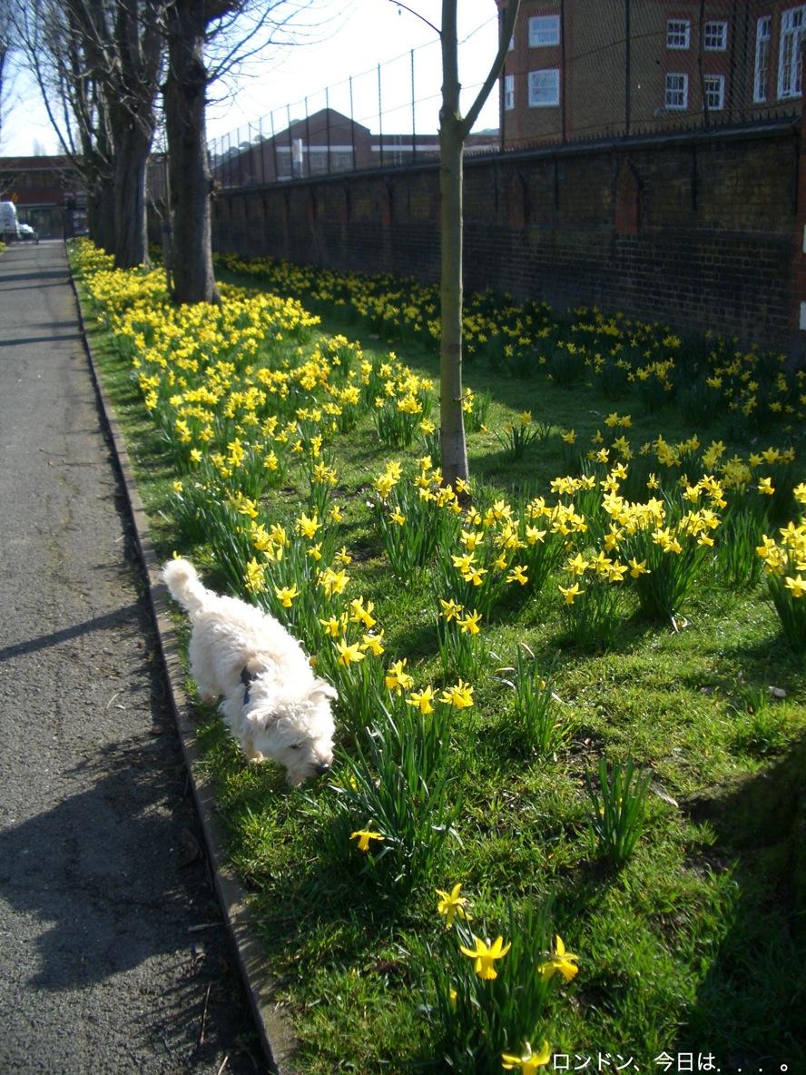 春の訪れを告げる花_a0137487_23414061.jpg