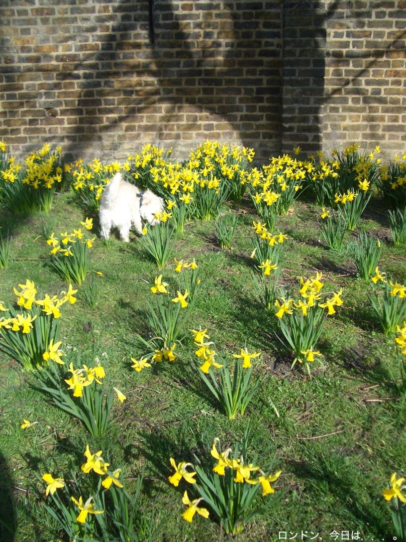 春の訪れを告げる花_a0137487_23442941.jpg