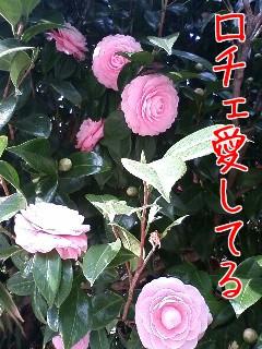 d0039189_1272281.jpg