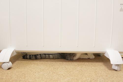 パネルヒーターの後ろに隠れていたお坊ちゃん