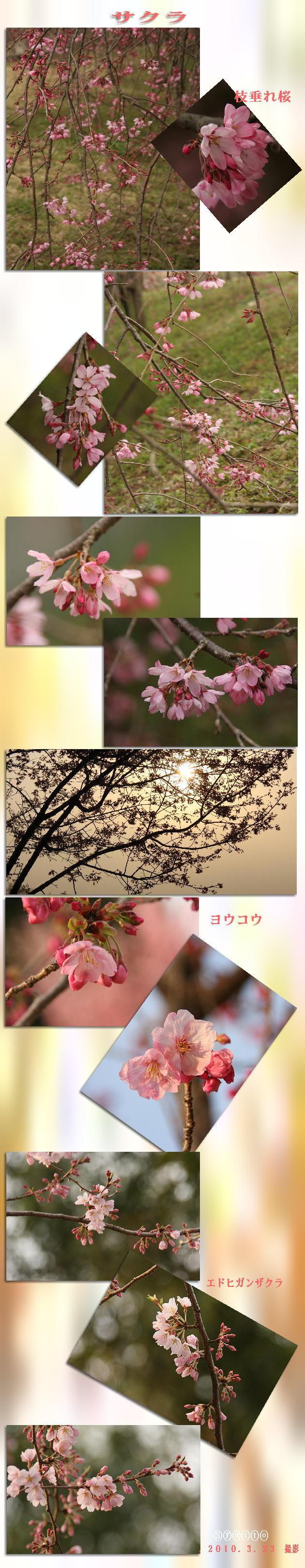 f0164592_17554696.jpg