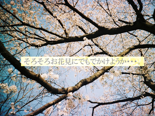 a0153395_14295964.jpg
